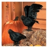 Black Feathered Crow Prop