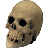 Halloween Foam Filled Rubber Skull Yorick Skull